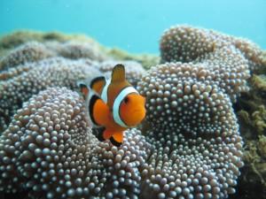 Let's meet Nemo...